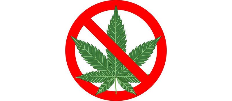 Влияет конопля на здоровье человека толстовка марихуана